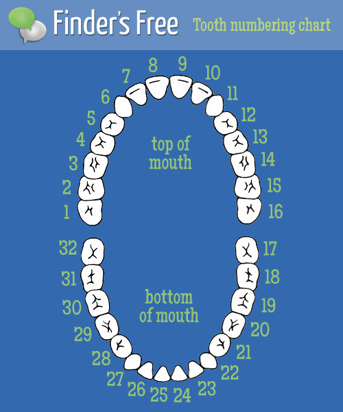 That tooth number 1 is your third molar (aka a wisdom tooth). An adult ...