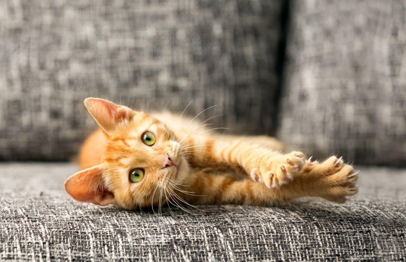 Should you de-claw a cat