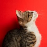 Cute cat looking up and showing whiskers