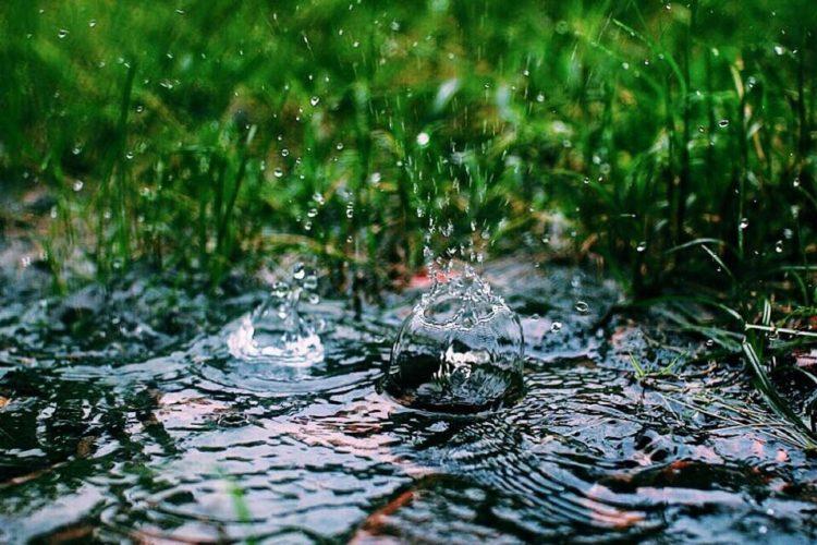 Raindrops on wet grass