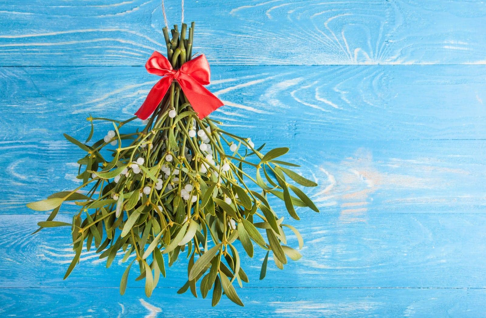 Is mistletoe poisonous