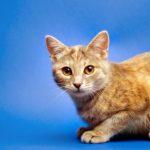 Cute male cat
