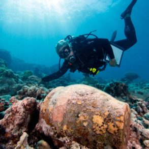 Ginger jar at the Two Brothers shipwreck site