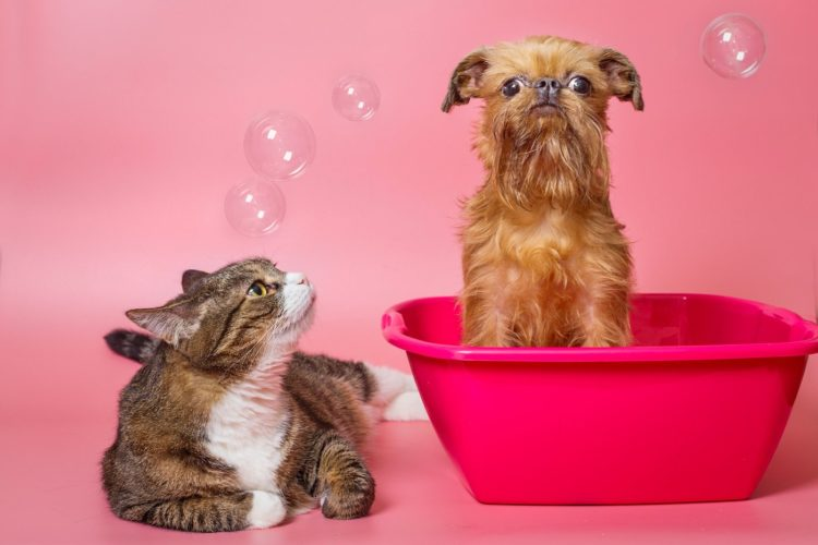 Cat and dog getting a bath
