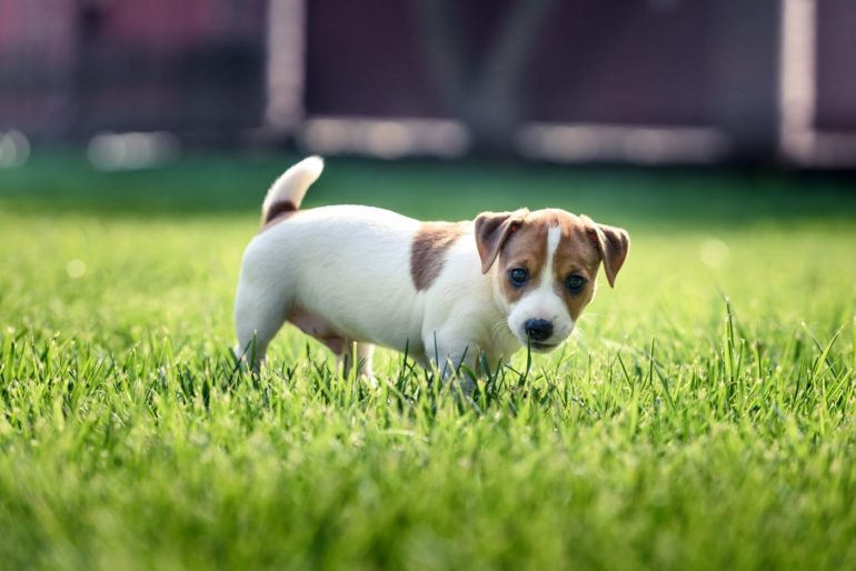 Cute puppy on lawn grass