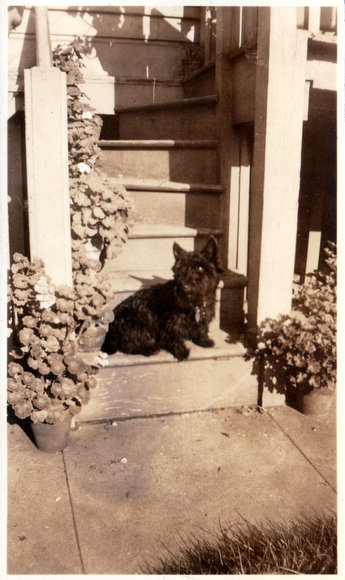Jim the dog in 1938