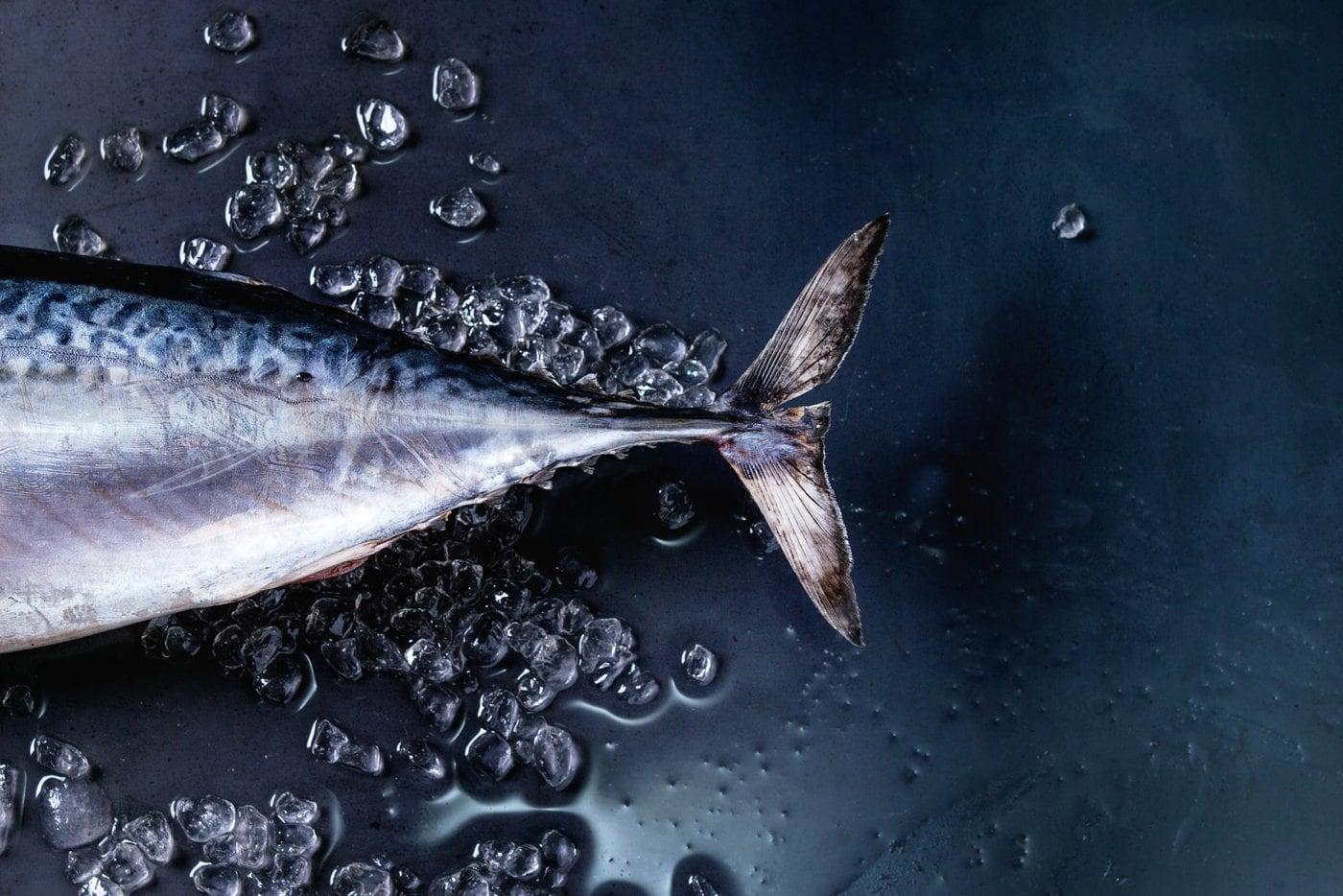 Tail of a fresh raw tuna fish