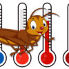 Temperature from cricket chirps