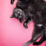 Cute cat upside down