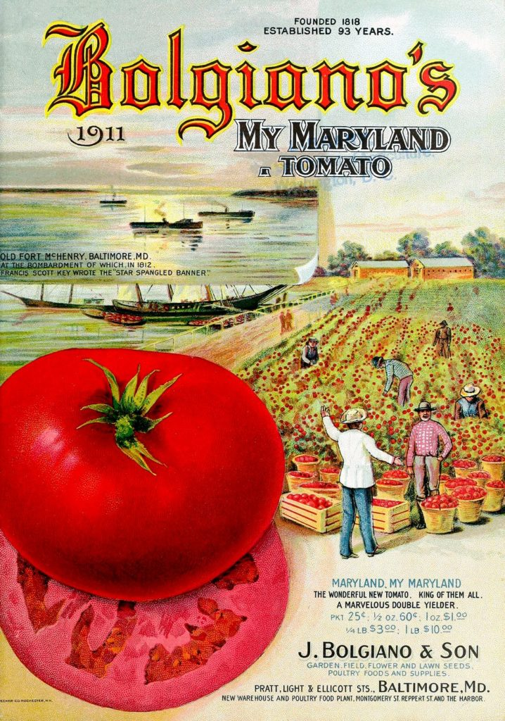 Vintage Bolgianos tomato catalog from 1911