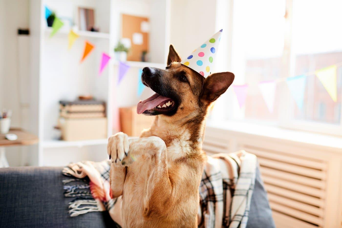 Cute dog tricks